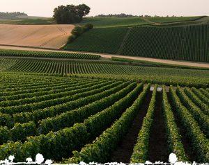 Domaine Champagnes Legret & Fils