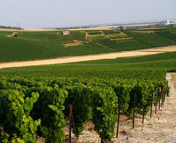 Vignes champagne Legret & Fils